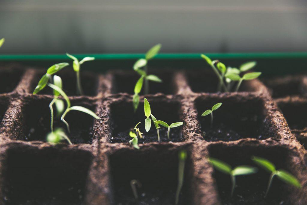 Extend Summer Gardening with an Enclosed Porch Garden